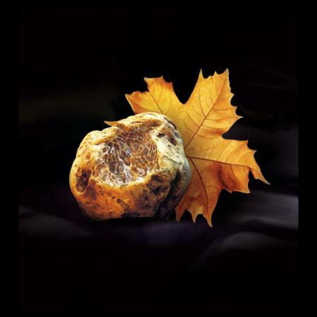 A ottobre a pergola si tiene la fiera del tartufo bianco pregiato. vieni a scoprirlo!